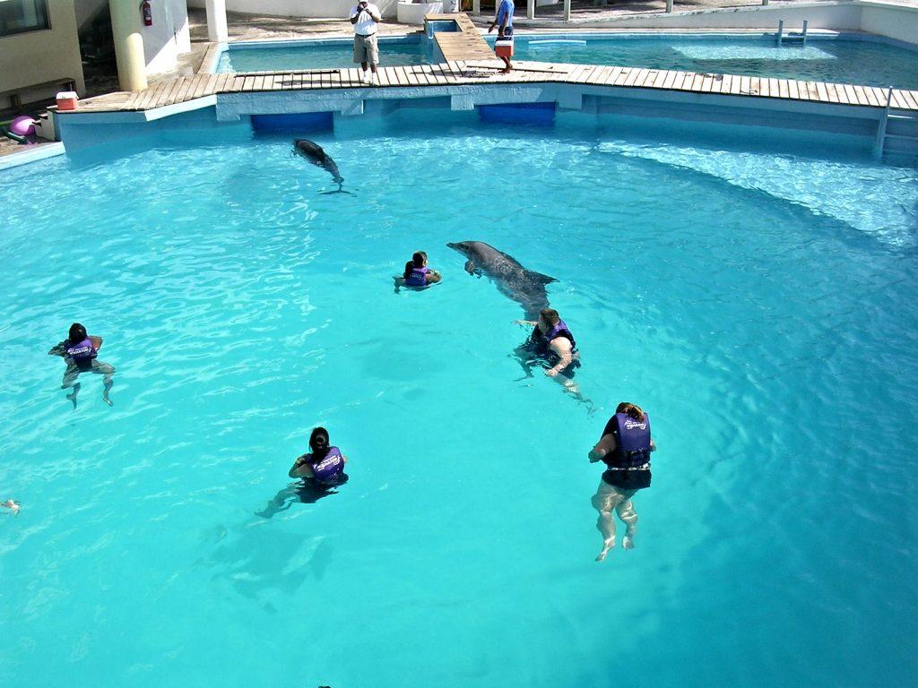 Dolphin Experience: Cancun, Mexico near Moon Palace